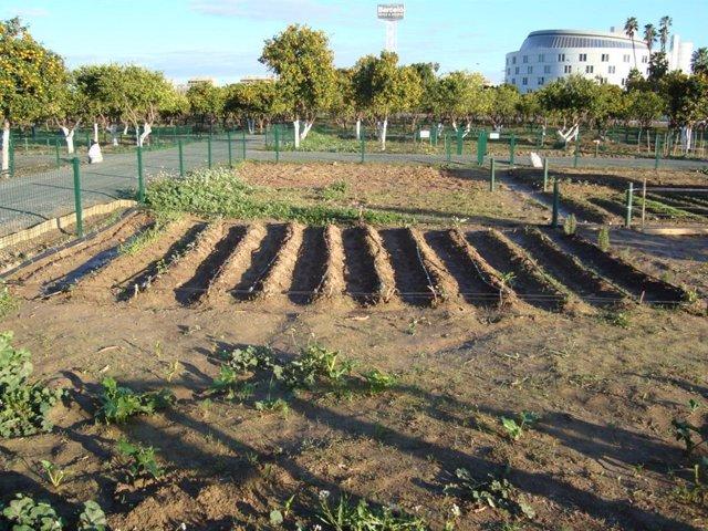 Huertos en el parque metropolitano del Alamillo, que son adjudicados por la Junta de Andalucía