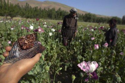 La pandemia de COVID-19 impulsa la fabricación y el consumo de drogas, según la ONU