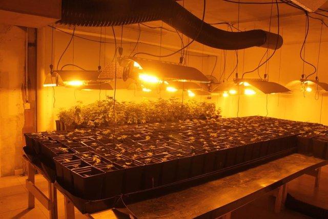 Desarticulada una organización dedicada al tráfico de drogas con la detención de 12 personas en la provincia de A Coruña.