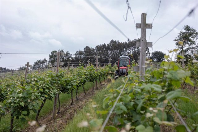 Un trabajador montado en un tractor trabaja en los viñedos de la empresa Txakoli Txabarri de Zalla