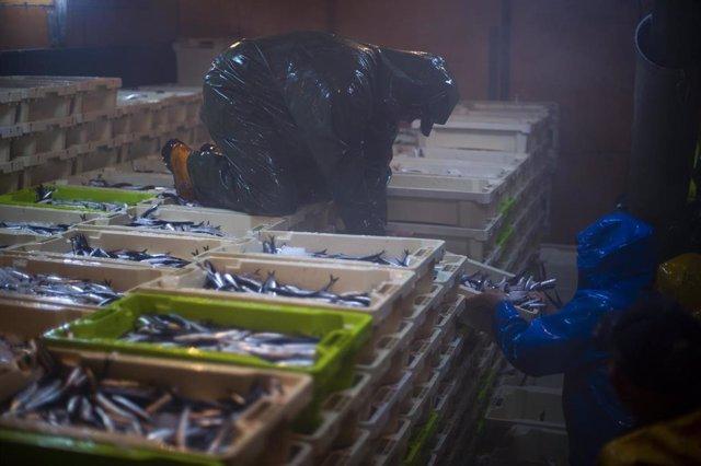 La captura de los peces no se toca con las manos en ningún momento del proceso. Imagen de los marineros organizando las cajas en la bodega del barco  .