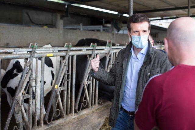 El presidente del PP, Pablo Casado (i), durante su visita a una explotación láctea  en Cospeito, Lugo, Galicia (España), a 29 de junio de 2020.