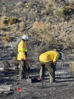 El Infoca inspecciona los restos de las colmenas donde se originó el incendio de Sierra Cabrera, en Almería
