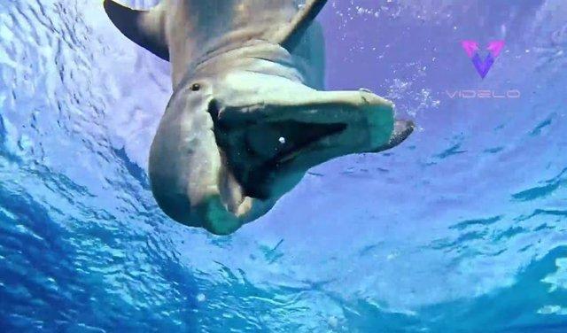 Un delfín con ganas de jugar se detiene a interactuar con un buzo y el momento queda registrado en vídeo