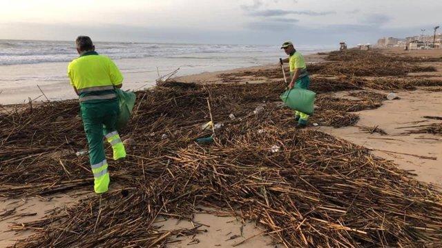 Retirada de bardomeras de les platges de Guardamar