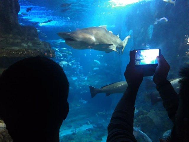 Tiburones en el Aquarium de San Sebastián