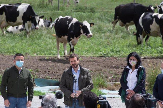 El presidente del PP, Pablo Casado, durante su visita a una explotación láctea, en Cospeito, Lugo, Galicia (España), a 29 de junio de 2020.