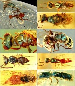 Fósiles conservados en ámbar revelan el verdadero color de los insectos de hace