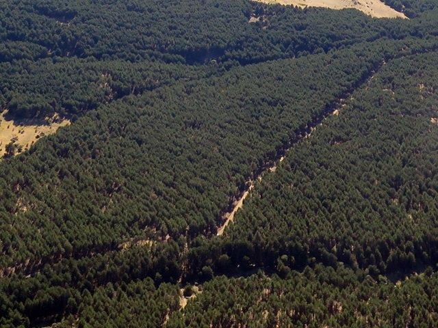 Masa forestal en Castilla y León.