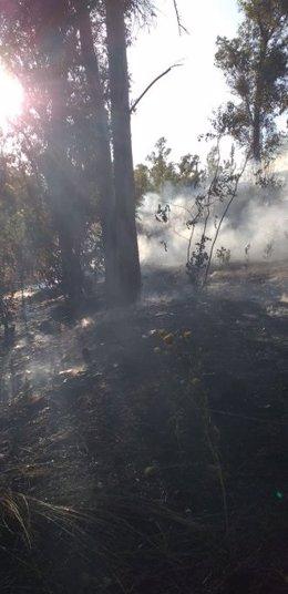 Incendio forestal declarado en El Castillo de las Guardas (Sevilla)