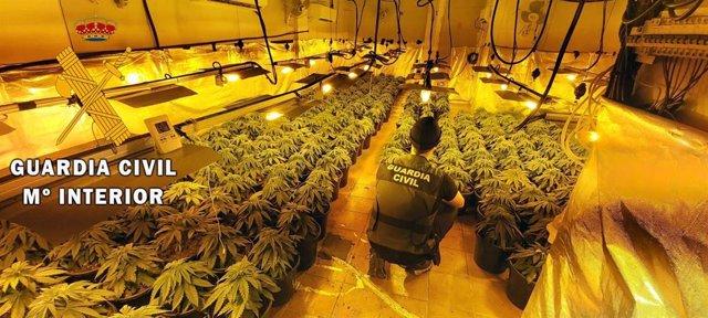 Cultivo de 297 plantas de marihuana localizado en una vivienda de Roquetas (Almería)