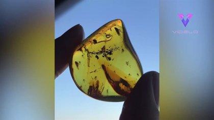 Así es el aspecto de una burbuja atrapada en un fósil