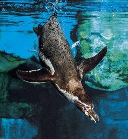 L'Aquàrium de Barcelona obrirà el 10 de juliol
