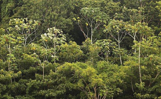 Amazonia en Brasil