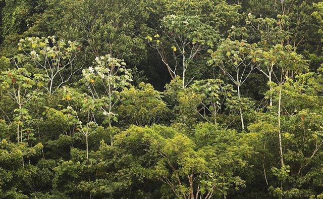 Brasil.- Bolsonaro reivindica el papel del Gobierno en la Amazonía para acabar c