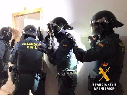 """Intervenidas 4.200 plantas de marihuana en un """"narco bloque"""" de Roquetas (Almería) que acogía peleas ilegales de gallos"""