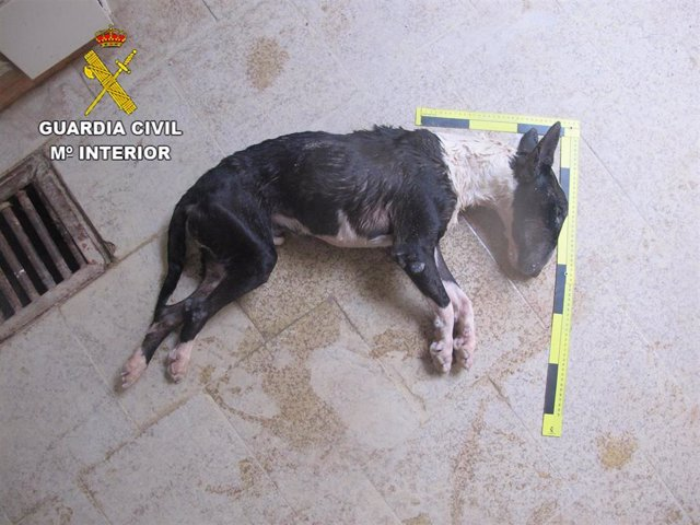 Perro muerto por inanición en Brihuega (Guadalajara).