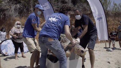 La tortuga Colomera ya ha bordeado Mallorca y nada al sur de Menorca
