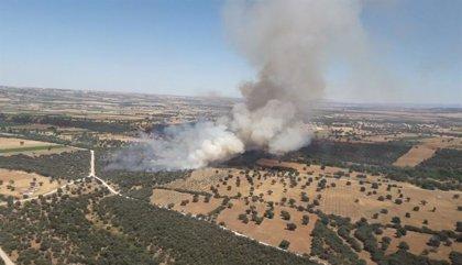 Declarado un incendio forestal en Malpica en el que trabajan 8 medios y 39 personas