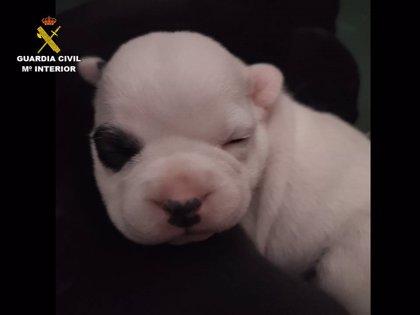 Recuperan a una perrita de una camada de cinco cachorros robada gracias a pruebas de ADN