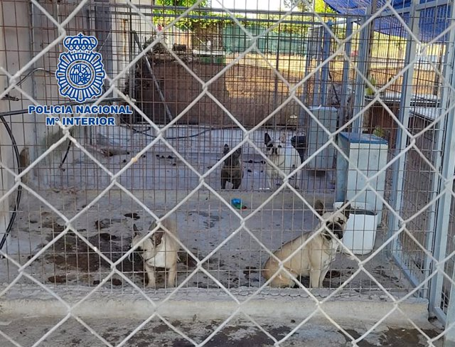 Criadero ilegal de perros en Don Benito