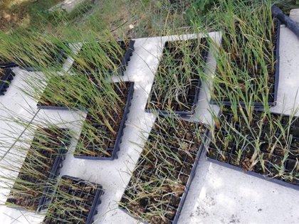 El IMIDRA impulsa un proyecto piloto para depurar aguas contaminada con plantas de laboratorio