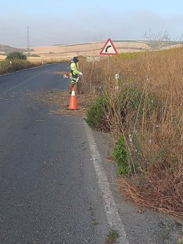 Actuaciones de la Consejería de Fomento, Infraestructuras y Ordenación del Territorio para conservar y mantener los márgenes de carreteras en la provincia de Cádiz.