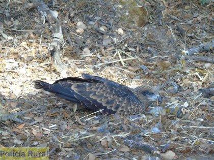 Aumenta la recogida y recuperación de especies protegidas en Monzón