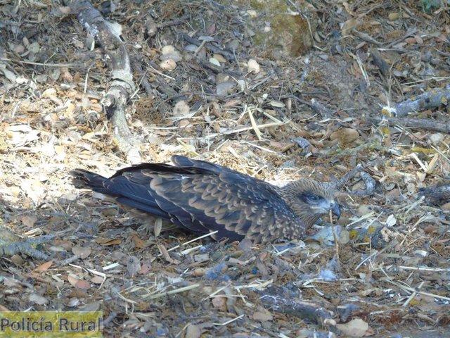 Aumenta la recogida y recuperación de especies protegidas en Monzón.