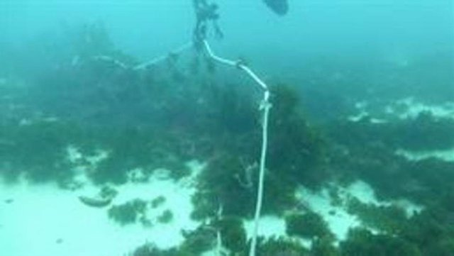 "Ecologistas detectan en el Estrecho de Gibraltar ""barcos marroquíes"" pescando ""i"