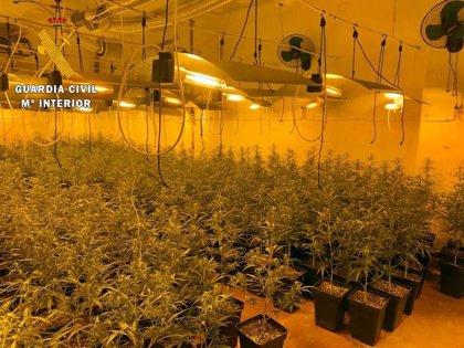 La Guardia Civil detiene en Mérida a un grupo criminal dedicado al cultivo de marihuana