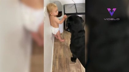 Pillan 'in fraganti' a este bebé de 11 meses dando de comer al perro de la familia