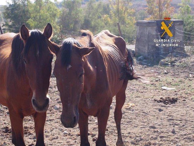 Animales rescatados por Seprona de la Guardia Civil