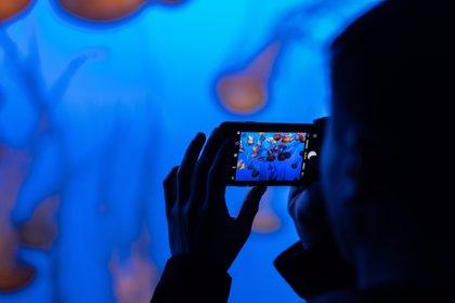 Presentan el códec H.266, que permitirá capturar vídeos de mayor calidad con un menor peso