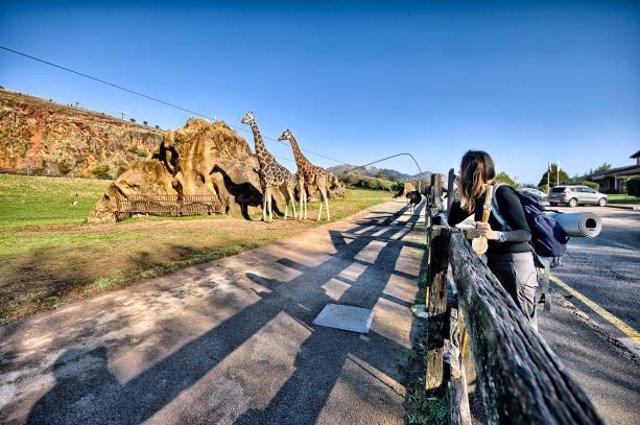 Recinto de las jirafas de Cabárceno