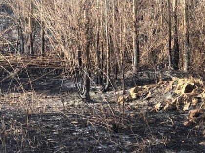Más de 5.250 efectivos lucharán contra el fuego este verano en el Plan de Incendios para apoyar a las CCAA