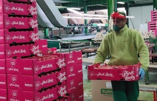 Un trabajador de una empresa frutícola.