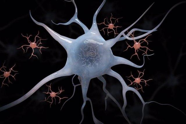 Microglia y neuronas.