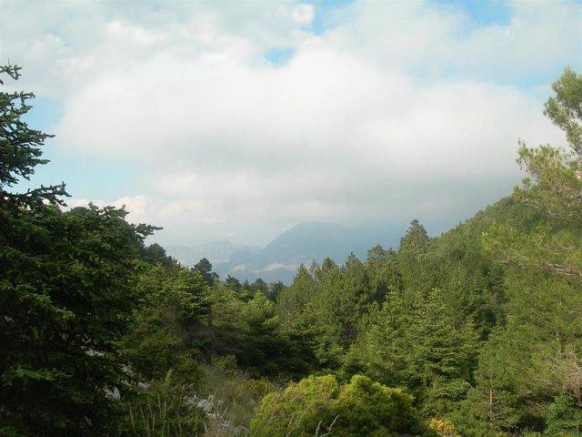 Pinsapar del futuro Parque Nacional Sierra de las Nieves de la provincia de Málaga, con 23.000 hectáreas en siete municipios malagueños