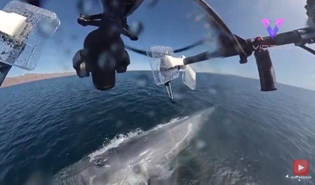 Un dron captura el épico estronudo de una ballena azul