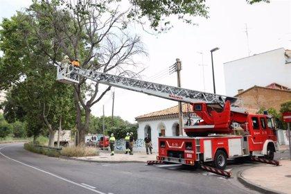 Zaragoza reactiva el plan extraordinario de poda sobre más de 3.000 árboles hasta fin de año