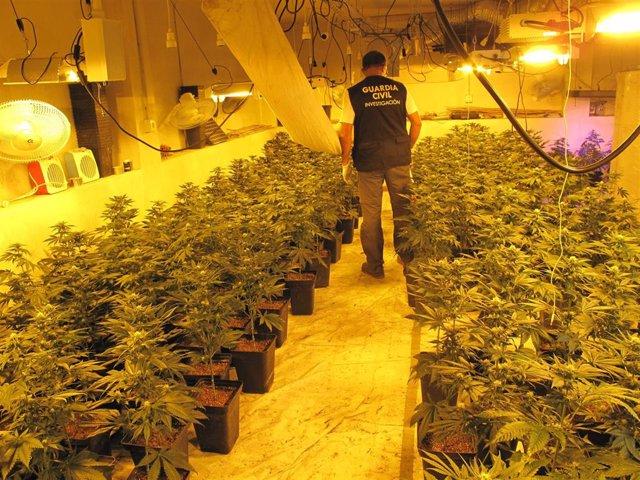 Plantación de marihuana intervenida por la Guardia Civil