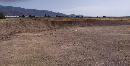 Científicos alertan de la pérdida de artales y azufaifares en el Poniente de Almería debido a la agricultura intensiva