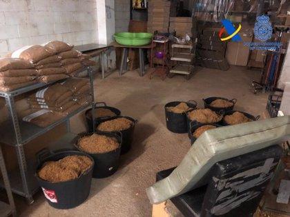 Desmantelada una fábrica clandestina con 4.000 kilos de tabaco picado en Alcalá de Guadaíra (Sevilla)