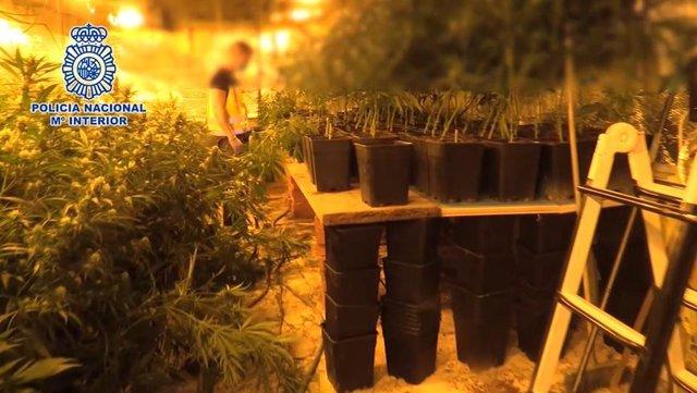Cae un de los mayores entramados en Madrid dedicados a importar heroían y cultivar y exportar marihuana