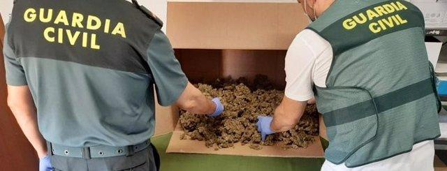 Guardia Civil con los cogollos intervenidos en Rena