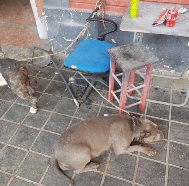 La Policía Local rescatan a dos perros atados en una planta baja sin comida ni agua