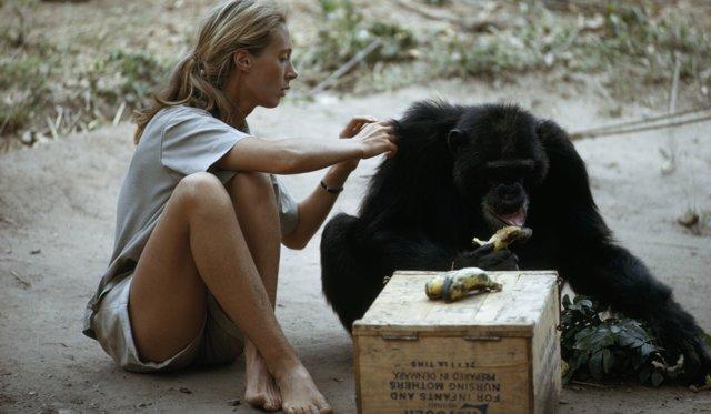 Disney+ celebra el 60º aniversario de la expedición de Jane Goodall a Gombe con el documental Jane