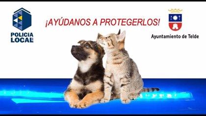 El Ayuntamiento de Telde recibe más de una veintena de alertas desde el inicio de una campaña contra el maltrato animal