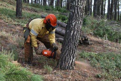 Los incendios forestales han arrasado 235 hectáreas durante la última semana en Extremadura